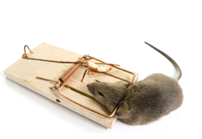 how to trap mice in your house