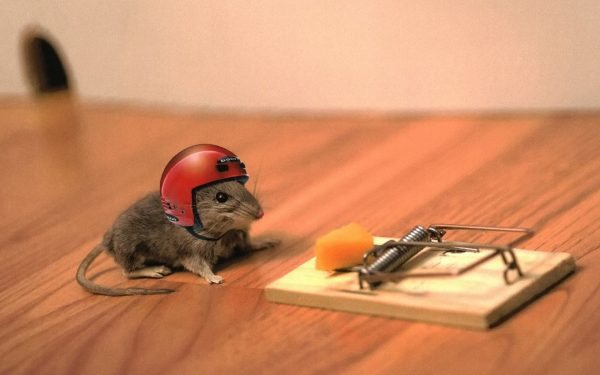 [Image: mouse-trap-helmet.jpg]