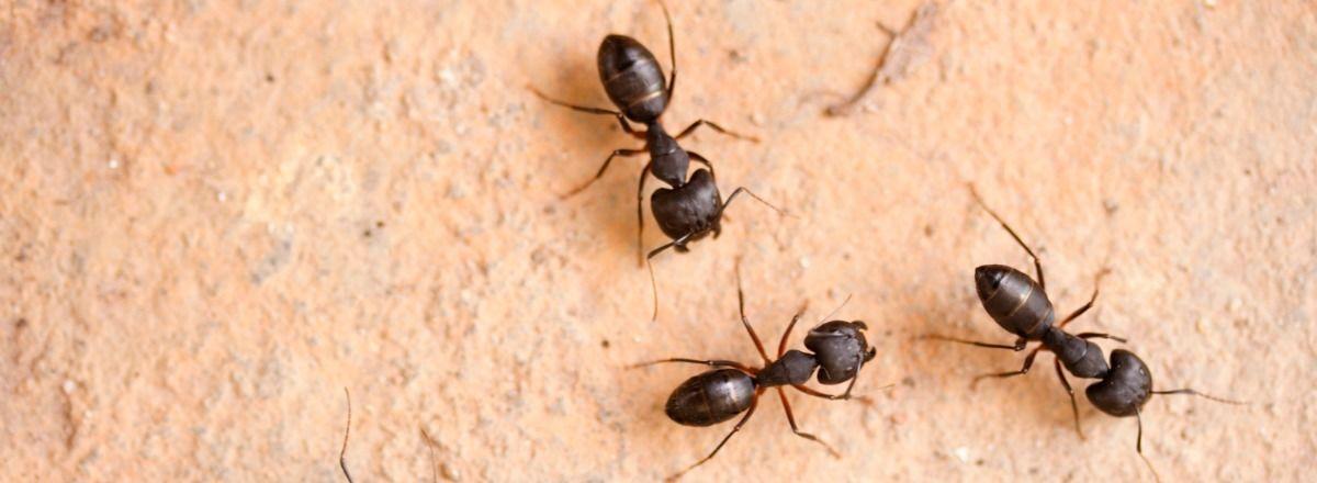 Amazing Pest Revenge