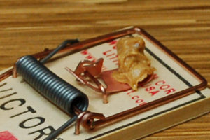 mouse trap with peanut butter