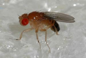 Do Fruit Flies Bite? - Pest Revenge