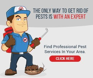 Find professional pest services in your area