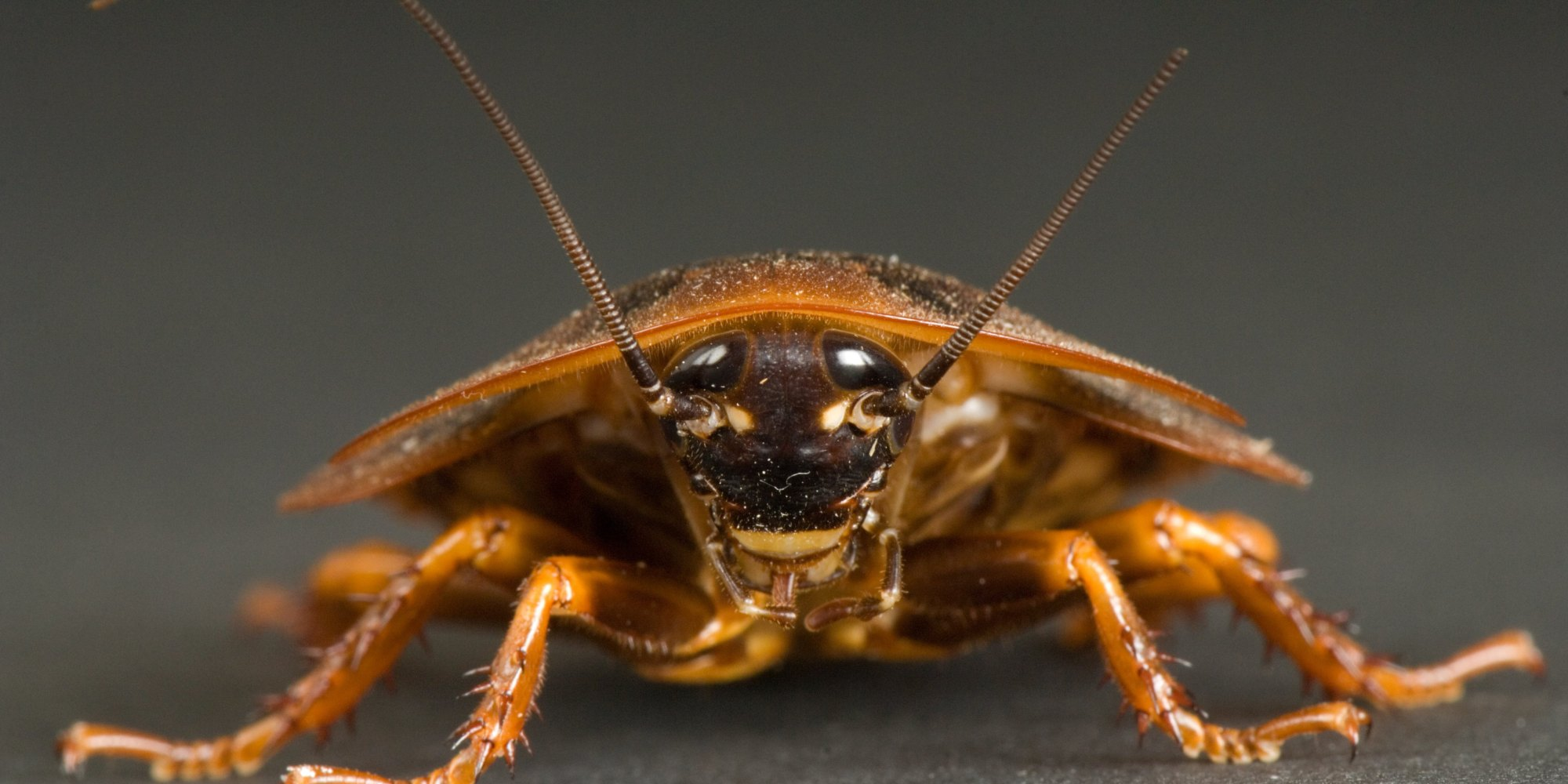 Getting Rid Of Roaches In Your Car