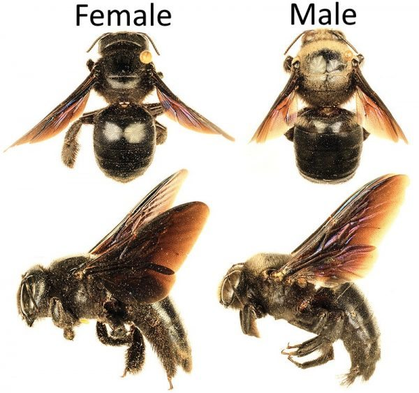 How To Get Rid Of Carpenter Bees Inside And Outside Your House