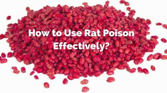 How to Use Rat Poison Effectively