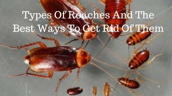 Types Of Roaches And The Best Ways To Get Rid Of Them