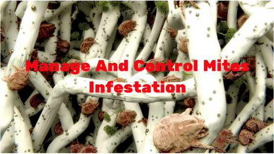Manage And Control Mites Infestation